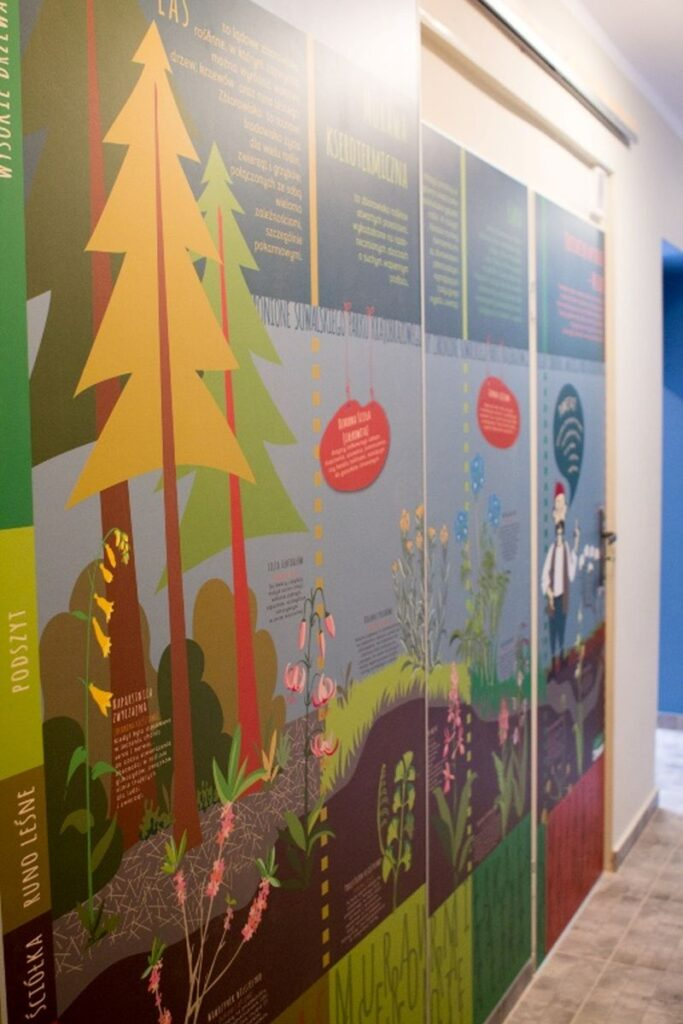 Warstwy lasu w punkcie informacji turystycznej, Turtul