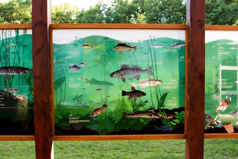 Wystawa ryby, Turtul
