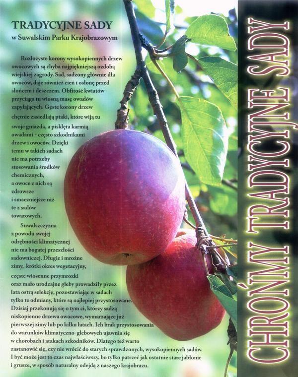 Chrońmy tradycyjne sady