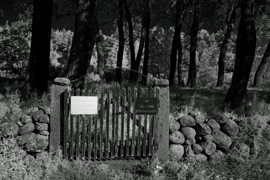 Cmentarz ewangelicki w Szeszupce. Fot.P.Wypych