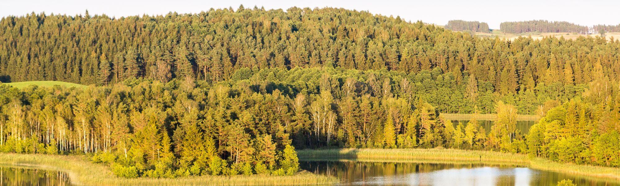 Jezioro Kojle