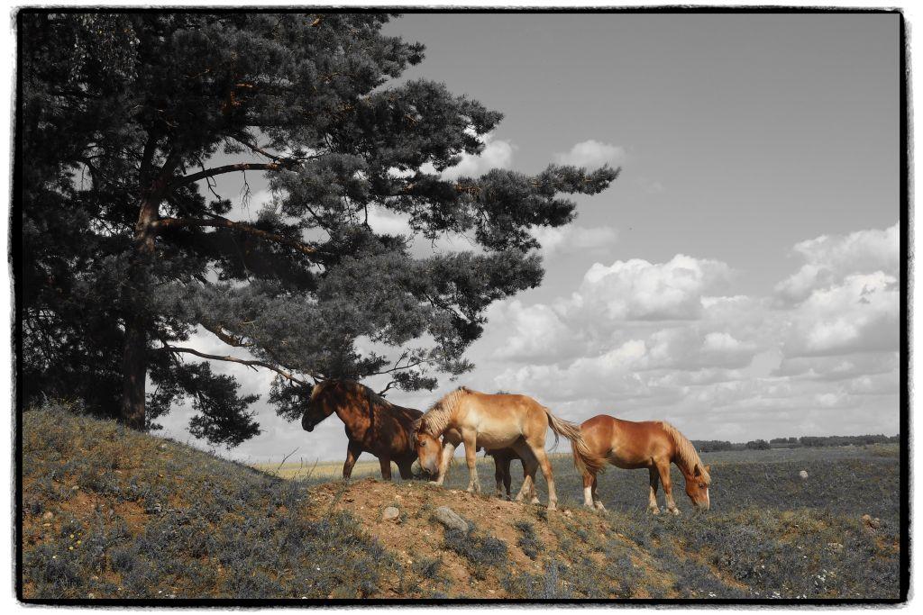Konie w SPK. Fot.P.Wypych