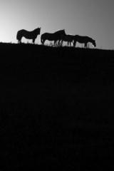 Konie w okolicy Turtula. Fot.P.Wypych