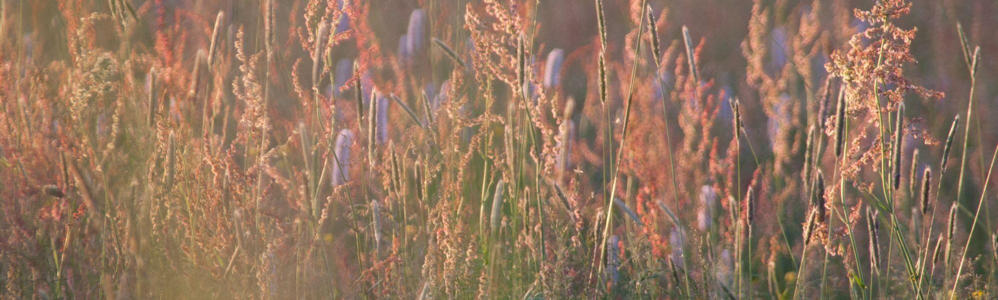 Łąka w Suwalskim Parku Krajobrazowym