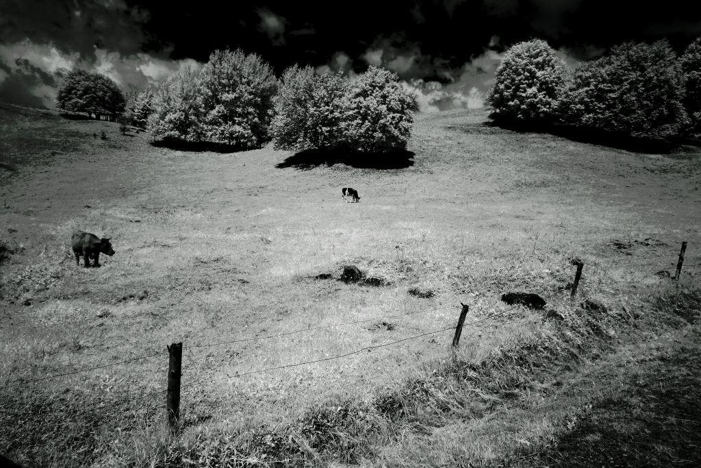 Pastwisko w okolicy Turtula. Fot.P.Wypych