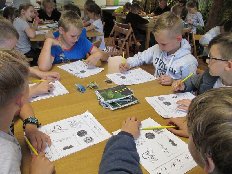 Warsztaty edukacyjne - Odkrywamy tajemnice płazów