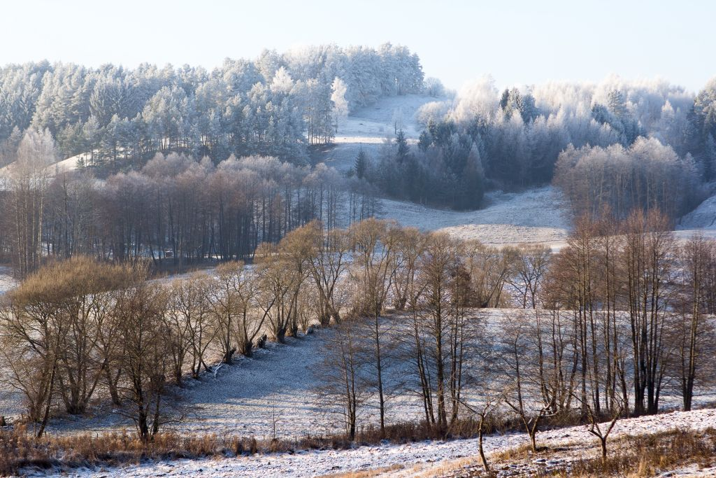 Aleja wierzbowa w Wodziłkach
