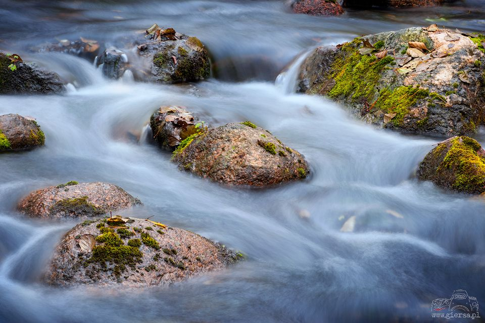 Rzeka Czarna Hańcza. Fot.M.Giersa