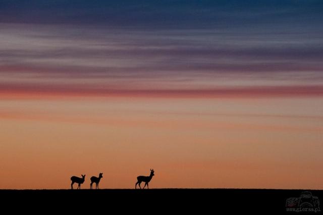 Po zachodzie słońca w Gulbieniszkach. Fot.M.Giersa