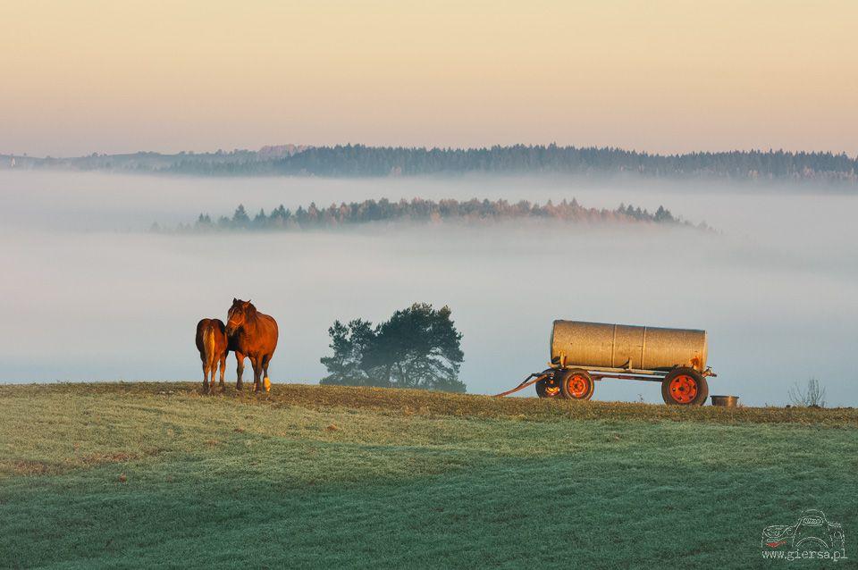 Poranne mgły w Gulbieniszkach. Fot.M.Giersa