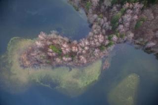 Strefa przybrzeżna jeziora Hańcza. Fot.H.Stojanowski