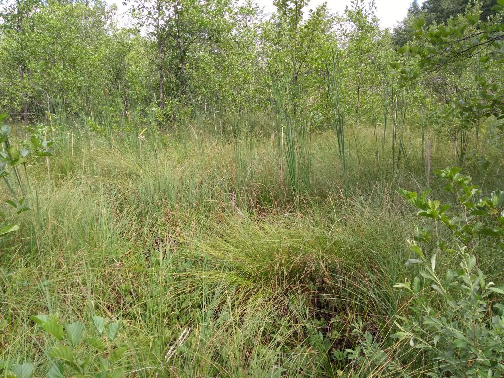Torfowisko przejściowe w Suwalskim Parku Krajobrazowym