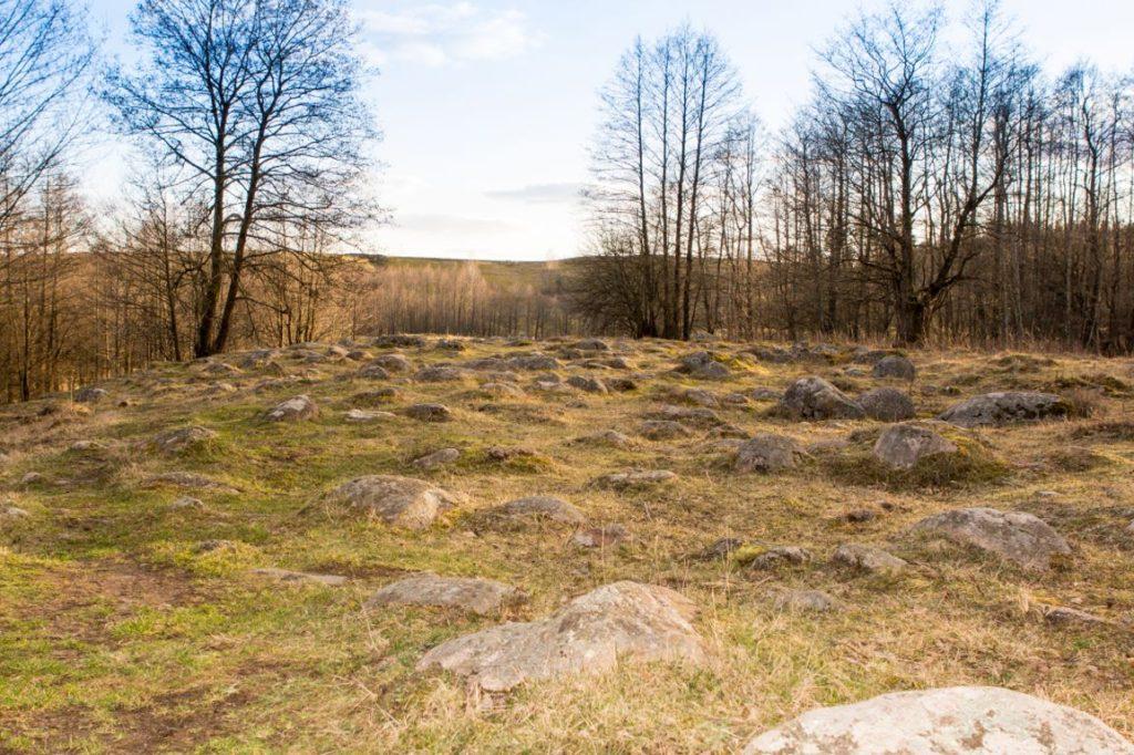 Głazy w rezerwacie przyrody Głazowisko Bachanowo