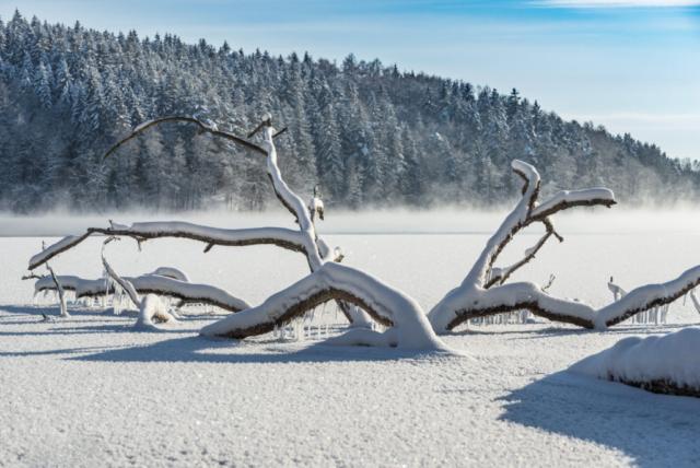 Jezioro Hańcza zimą. Fot.K.Mierzejewski