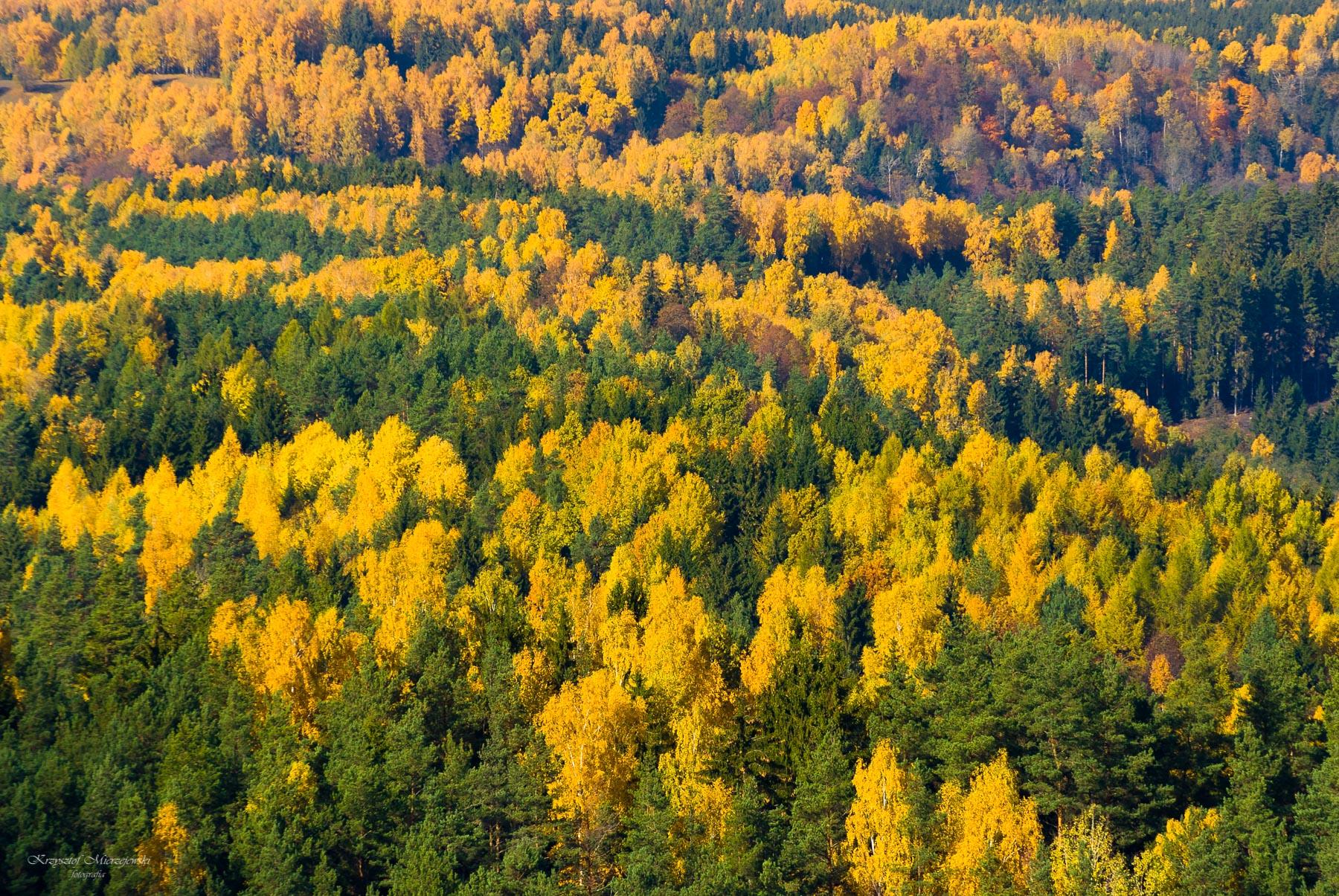 Jesiennie w SPK.Udziejek. Fot.K.Mierzejewski