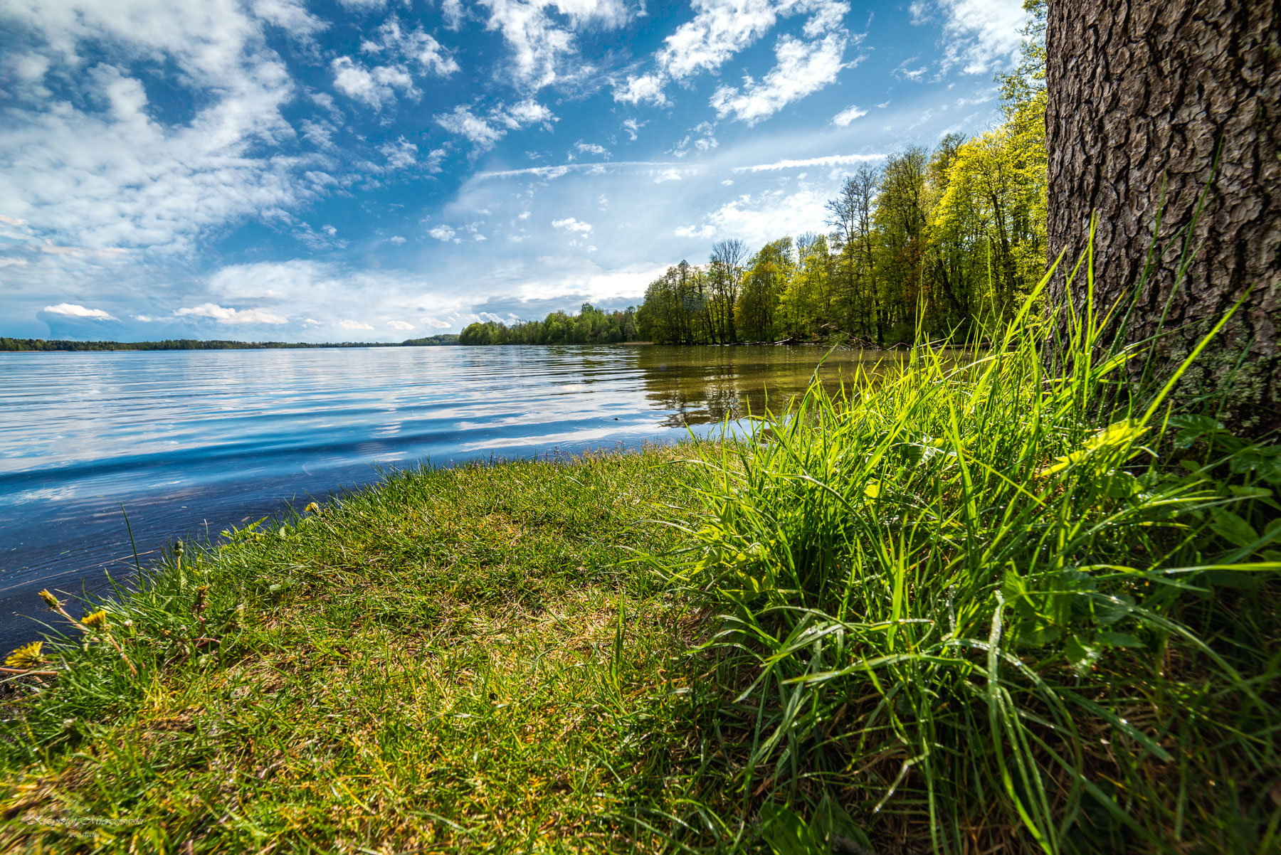 Jezioro Hańcza. Fot.K.Mierzejewski