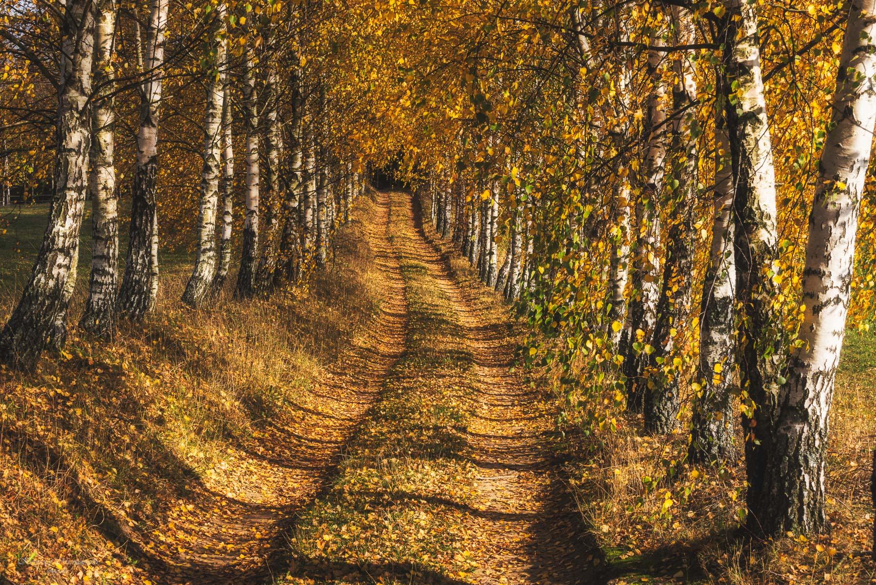 Na szlaku do Góry Zamkowej. Czajewszczyzna. Fot.K.Mierzejewski