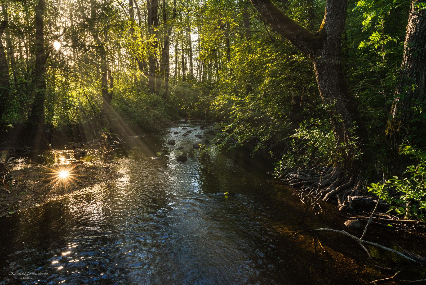 Rzeka Czarna Hańcza. Fot.K.Mierzejewski