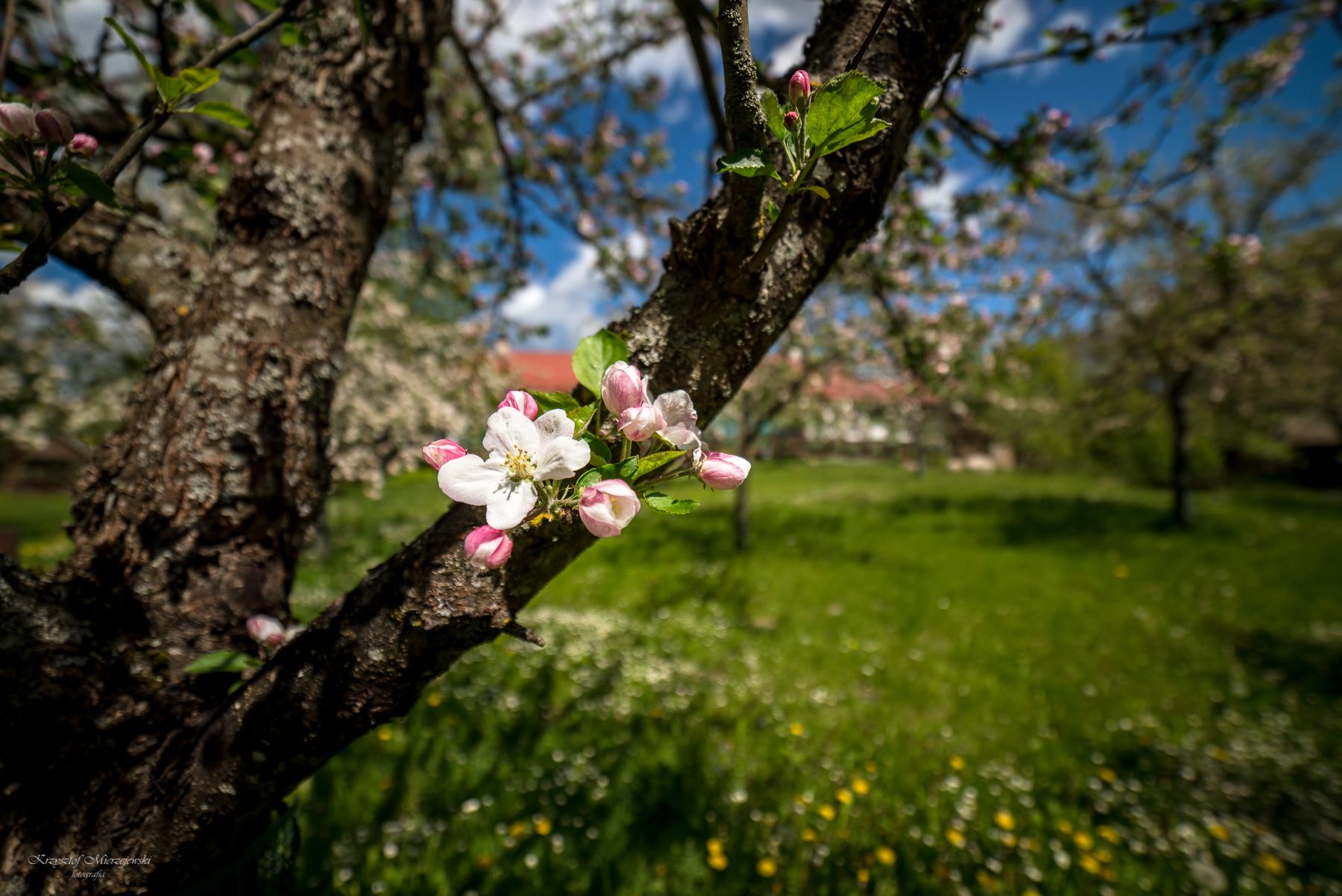 Wiosennie w Turtulu. Fot.K.Mierzejewski