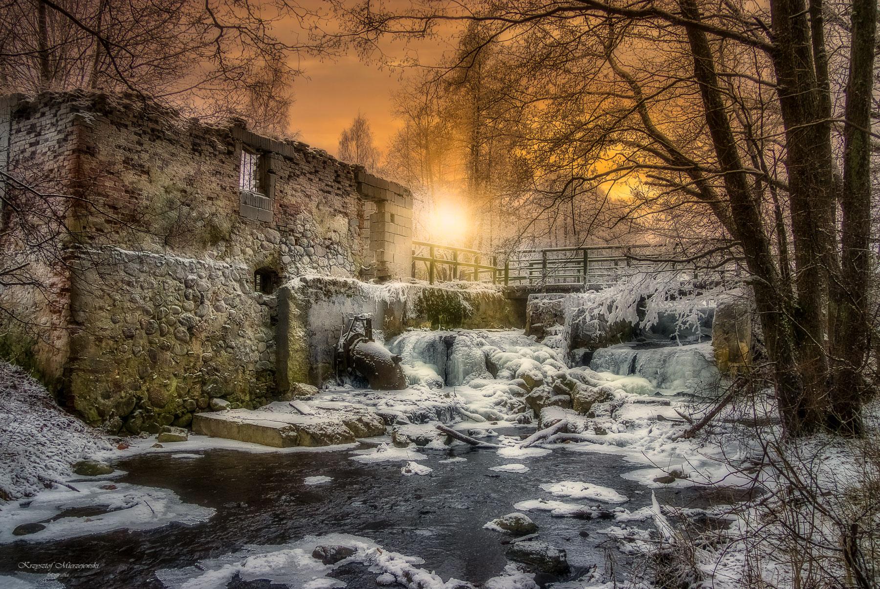 Zimowy Turtul. Fot.K.Mierzejewski