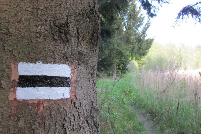 oznakowanie czarnego szlaku pieszego Wodziłki - Góra Zamkowa