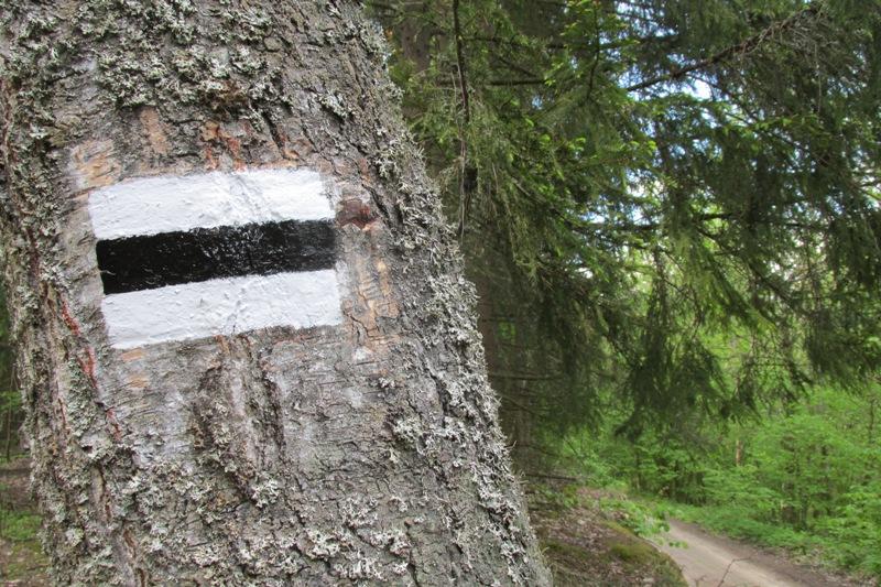 oznakowanie czarnego szlaku pieszego Gulbieniszki - Smolniki