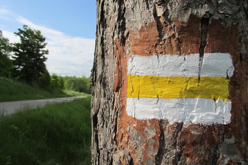 oznakowanie żółtego szlaku pieszego Sidory -Smolniki