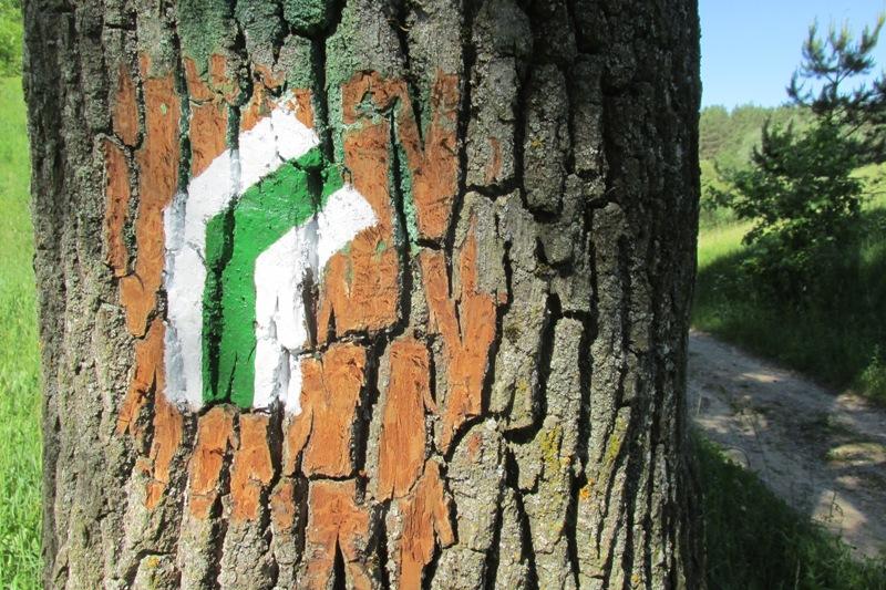 oznakowanie zielonego szlaku pieszego Jeleniewo - Smolniki
